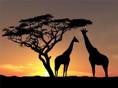 Африка - континент контрастов
