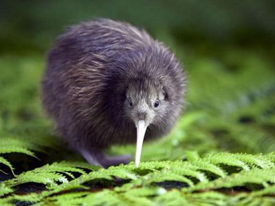 Новая Зеландия: животный и растительный мир