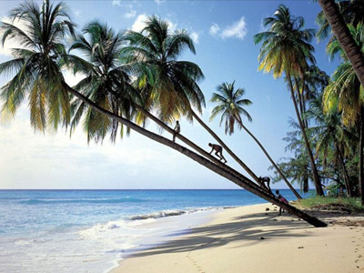 Отдых в январе в Гоа