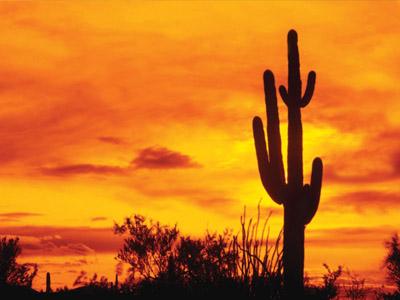 В страну экзотики: Мексика
