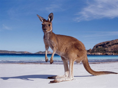 Австралия - чудо-континент