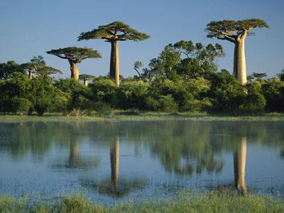 На далекий Мадагаскар