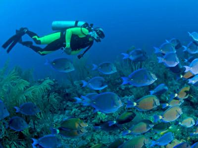 Чудеса подводного мира в Набк-Бэй