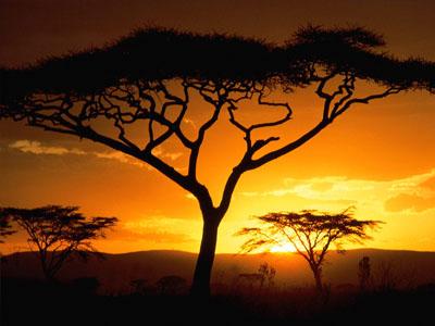 Танзания: коралловые острова и африканские деликатесы
